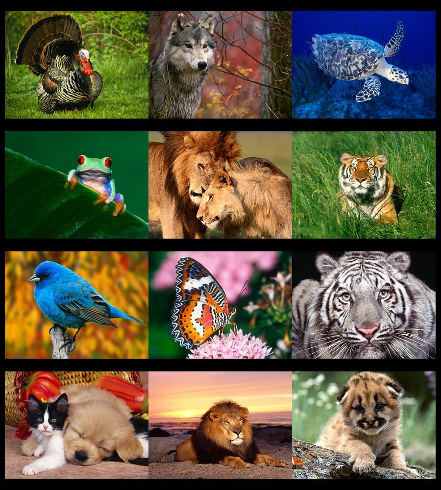 Ekim dünya hayvan haklarini koruma günü basin açiklamasi